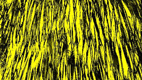 palmfoliage3